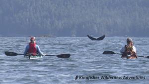 Southern Gwaii Haanas Kayak Tour - Humpback whales can be seen throughout Gwaii Haanas National Park.