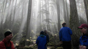 Kayak With Whales Tour - Sunshine beams into a misty rainforest.