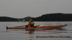 Whales and Grizzly Bears Kayak Tour - Orcas passing our kayaks in Johnstone Strait.