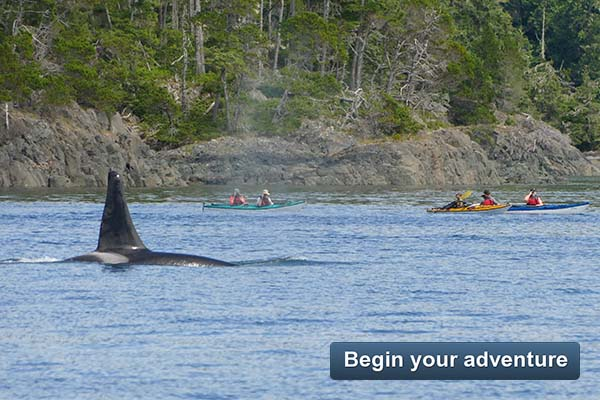 Whales and Wilderness Explorer - Begin your adventure