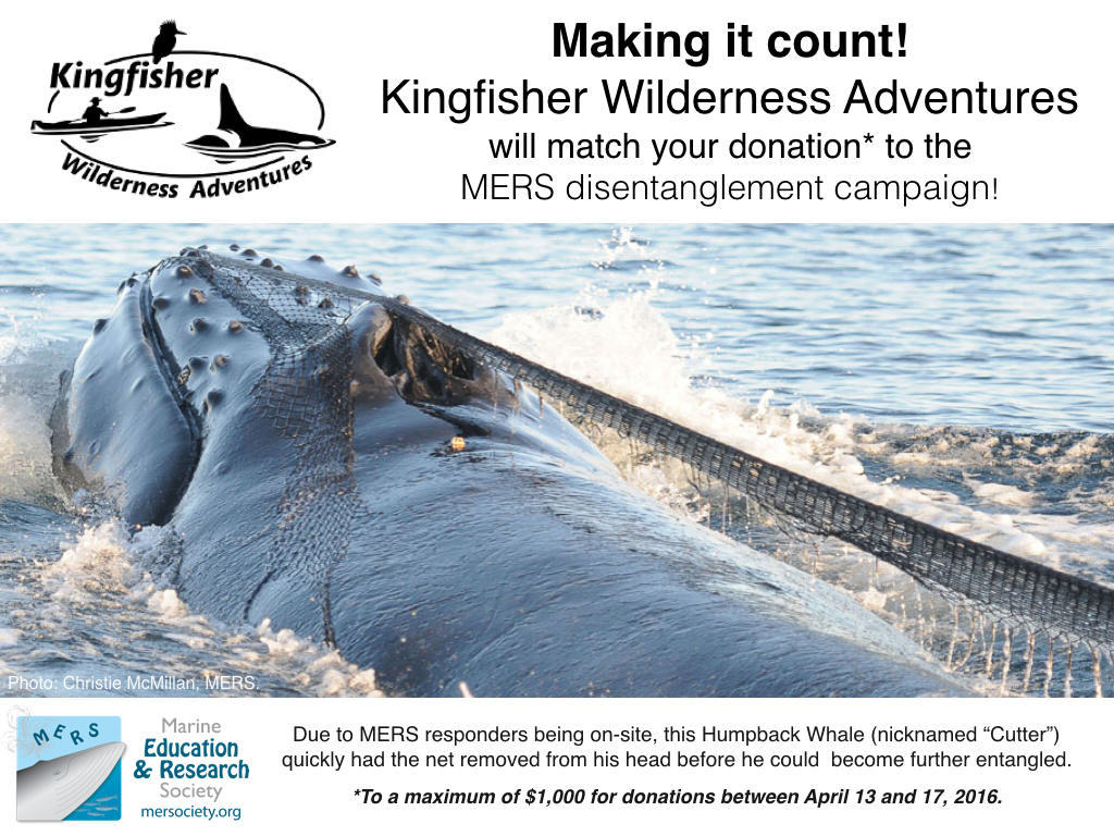 Humpback Whale Disentanglement - Fundraising Challenge