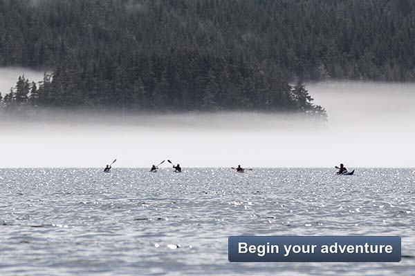Begin your adventure - Whales and Wildlife Explorer