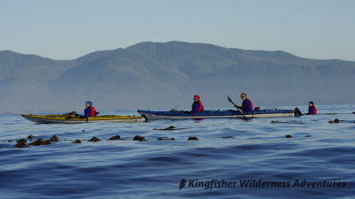 Kayaking with sea otters in Nuchatlitz