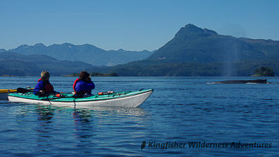 Kayak With Whales Kayak Tours