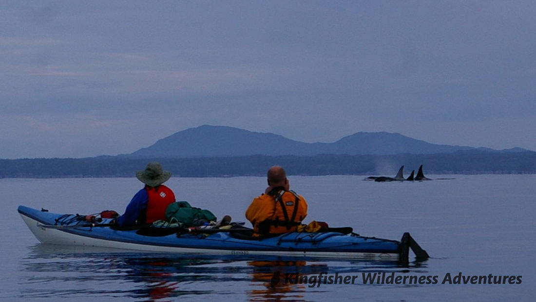 Great Bear Rainforest Kayak Expedition - An unexpected early morning visit from the A30 matriline of northern resident killer whales.