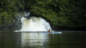 Sea Otter Explorer Kayak Tour - When the tide is right we can kayak upstream and reach this waterfall.