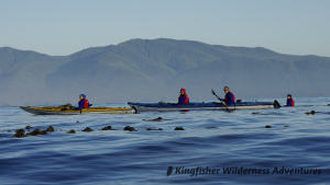 Sea Otter Explorer Kayak Tour - Kayaking the west coast of Vancouver Island