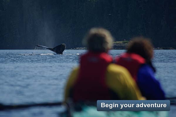 Kayak With Whales - Begin your adventure
