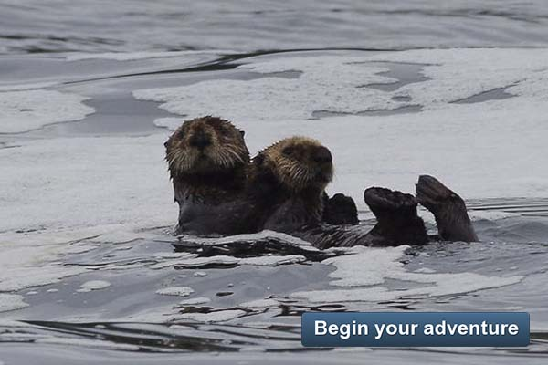 Sea Otter Explorer - Begin your adventure