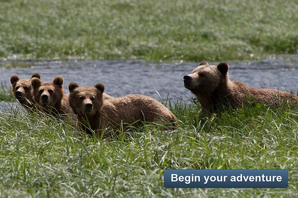 Whales and Grizzly Bears - Begin your adventure