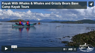 Kayak With Whales
