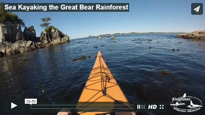 Kayaking The Great Bear Rainforest
