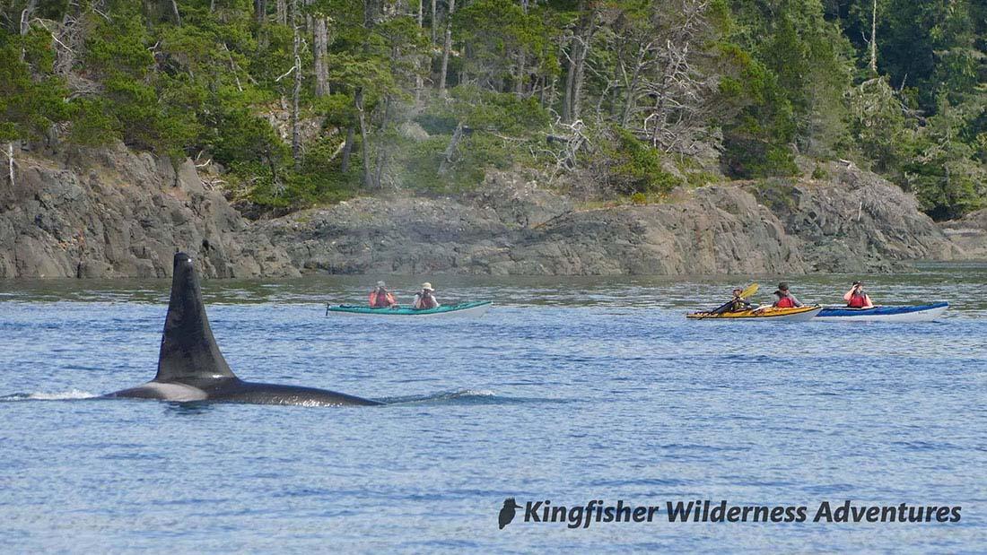 Kayak With Whales Kayak Tour Base Camp
