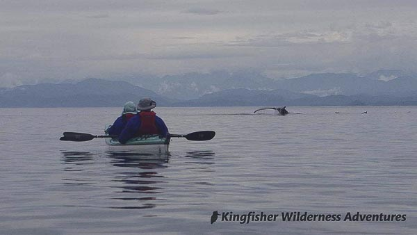A humpback whale dives in Blackfish Sound not far from our base camps.