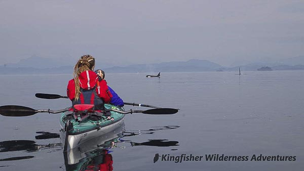 Orcas swim past our kayaks on a Kayak With Whales base camp tour.