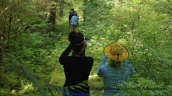 Great Bear Rainforest Kayak Expedition - An old trail in the Great Bear Rainforest.