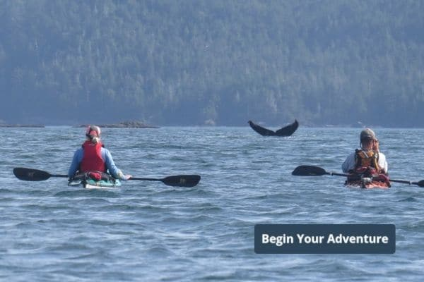 Whales and Wildlife - Begin Your Adventure